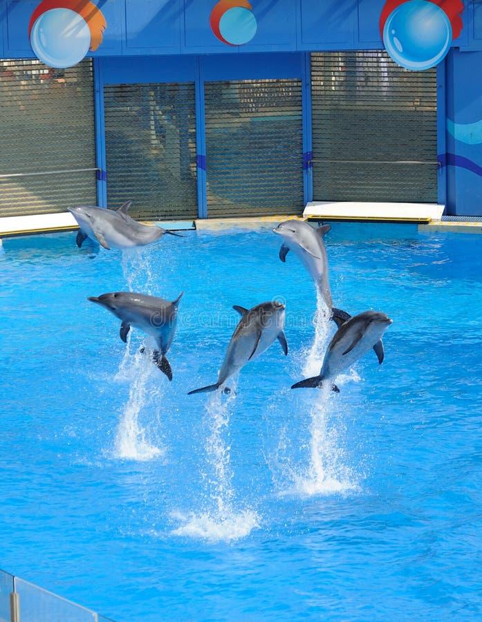 Executando o golfinho foto de stock