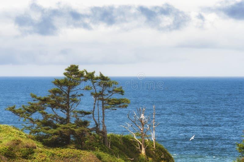 Exemplaar-ruimte de Kustlijnlandschap van Oregon royalty-vrije stock fotografie
