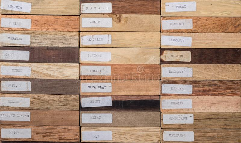 Exemplar des Holzes dendrology stockbilder