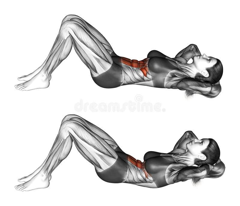 Exercício da aptidão Flexão do tronco com a elevação da pelve que encontra-se no assoalho fêmea ilustração do vetor