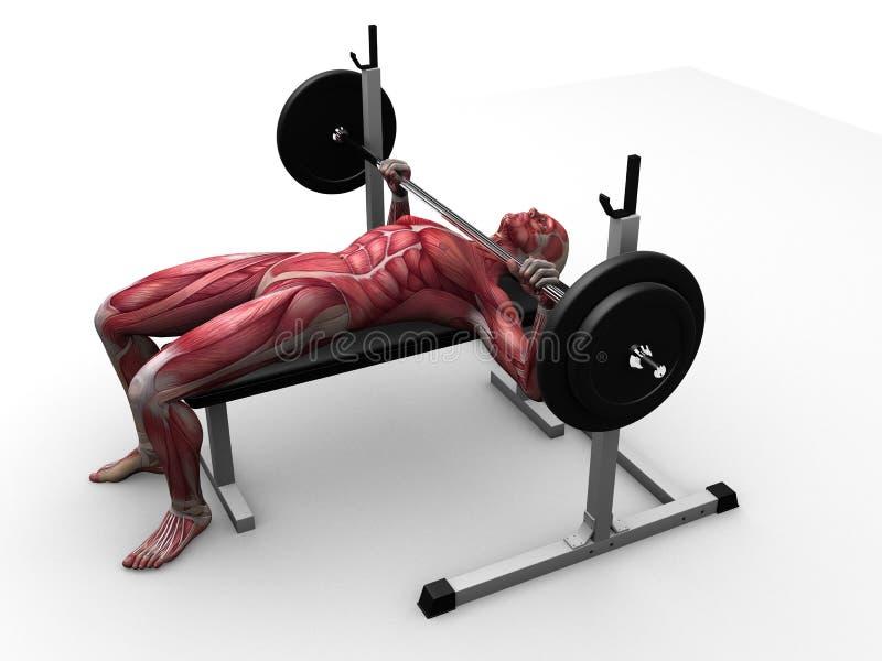 Exercício masculino - imprensa de banco ilustração stock