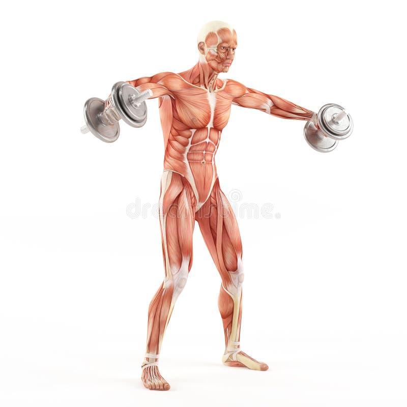 Exercice de gymnase de bodybuilding Haltères d'élevage tout en se tenant Augmenter deltoïde alternatif Groupe de muscle d'épaule illustration de vecteur