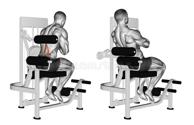Exercising. Back extension machine royalty free stock photography