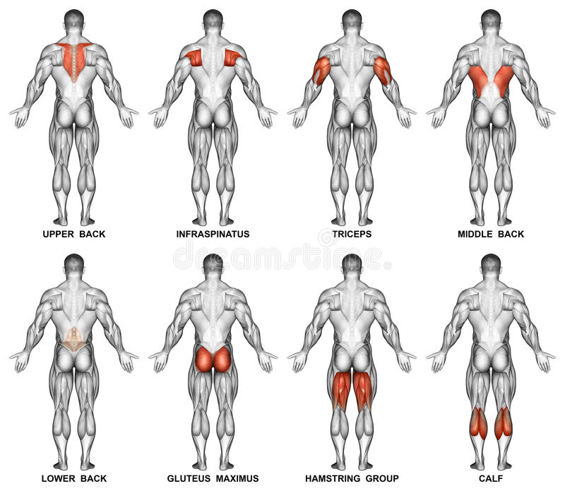 Exercising. Back projection of the human body royalty free stock image