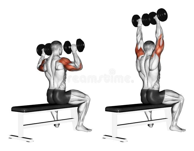Exercising. Bench dumbbell sitting vector illustration