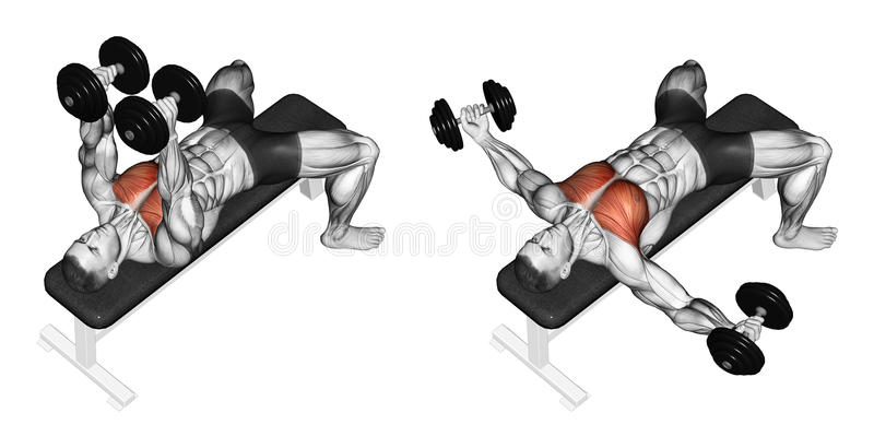 Exercising. Breeding dumbbells lying. Breeding dumbbells lying. Exercising for bodybuilding. Target muscles are marked in red. Initial and final steps stock illustration