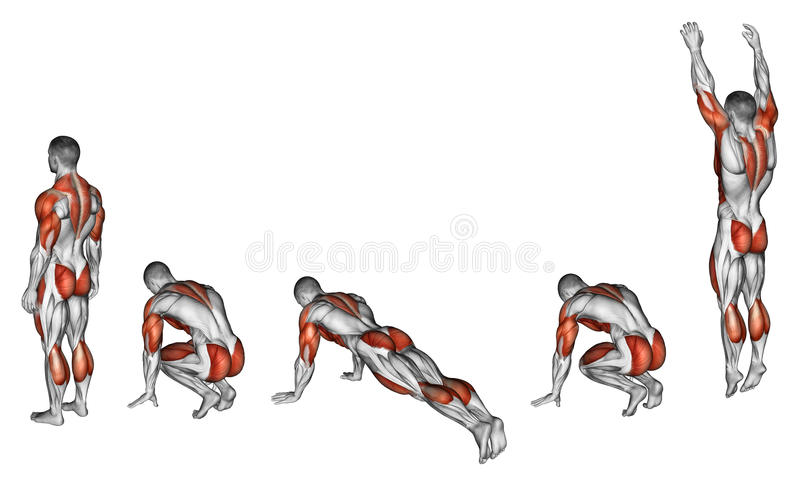 Exercising. Burpee. Burpee. Exercising for fitness. Target muscles are marked in red. Initial and final steps