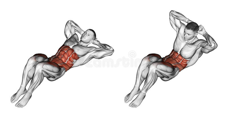 Exercising. Climbs the trunk. Climbs the trunk. Exercising for bodybuilding. Target muscles are marked in red. Initial and final steps stock illustration