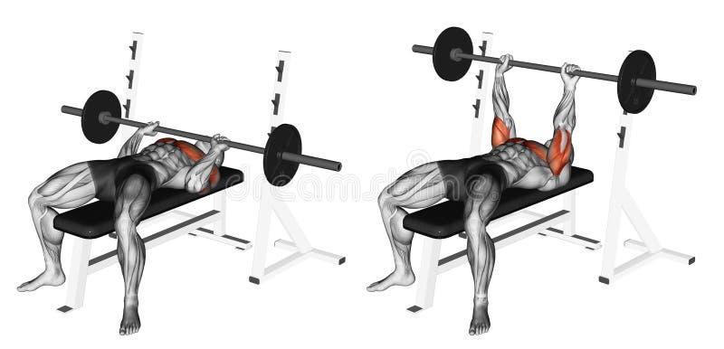 Exercising. Close-Grip Barbell Bench Press royalty free stock photos