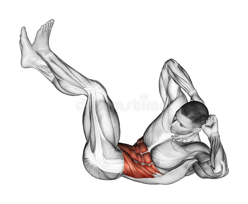 Exercising. Collapsing on the floor of the trunk. Collapsing on the floor of the trunk. Exercising for bodybuilding Target muscles are marked in red stock illustration