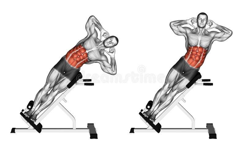 exercising Curva lateral en banco ilustración del vector
