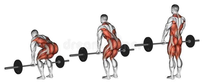 exercising Deadlifts met een barbell vector illustratie