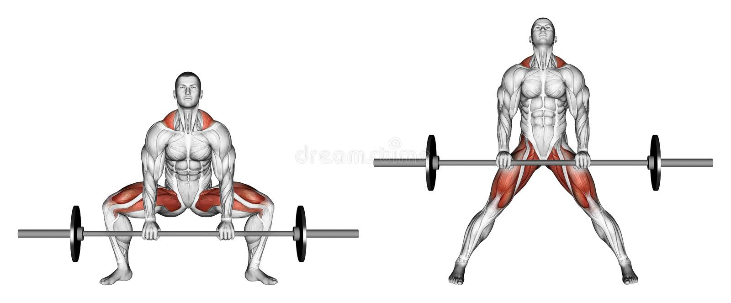 Exercising. Deadlifts sumo vector illustration