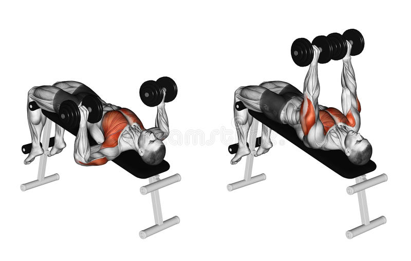 Exercising. Decline Dumbbell Bench Press. Decline Dumbbell Bench Press. Exercising for bodybuilding Target muscles are marked in red. Initial and final steps vector illustration