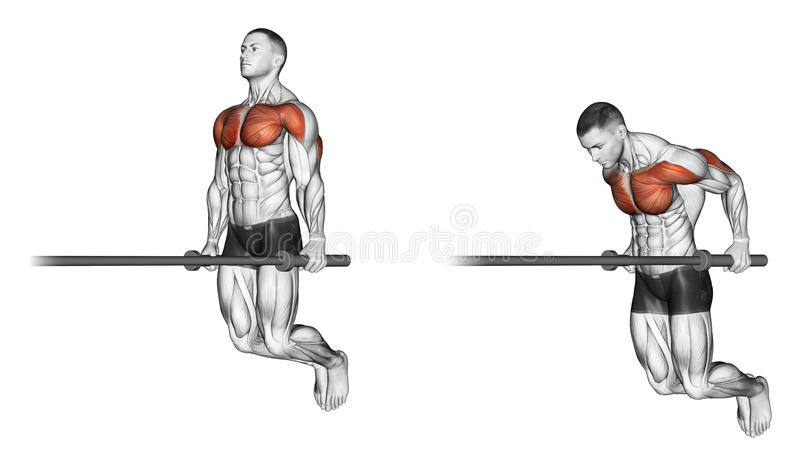 Exercising. Dips. Dips. Exercising for bodybuilding. Target muscles are marked in red. Initial and final steps vector illustration
