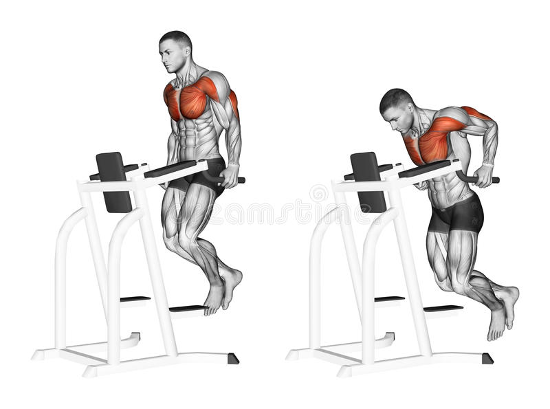 Exercising. Dips in the simulator. Dips in the simulator. Exercising for bodybuilding. Target muscles are marked in red. Initial and final steps royalty free illustration