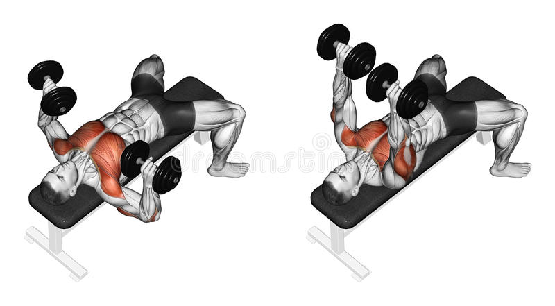 Exercising. Dumbbell bench press lying. second Emb royalty free stock photos