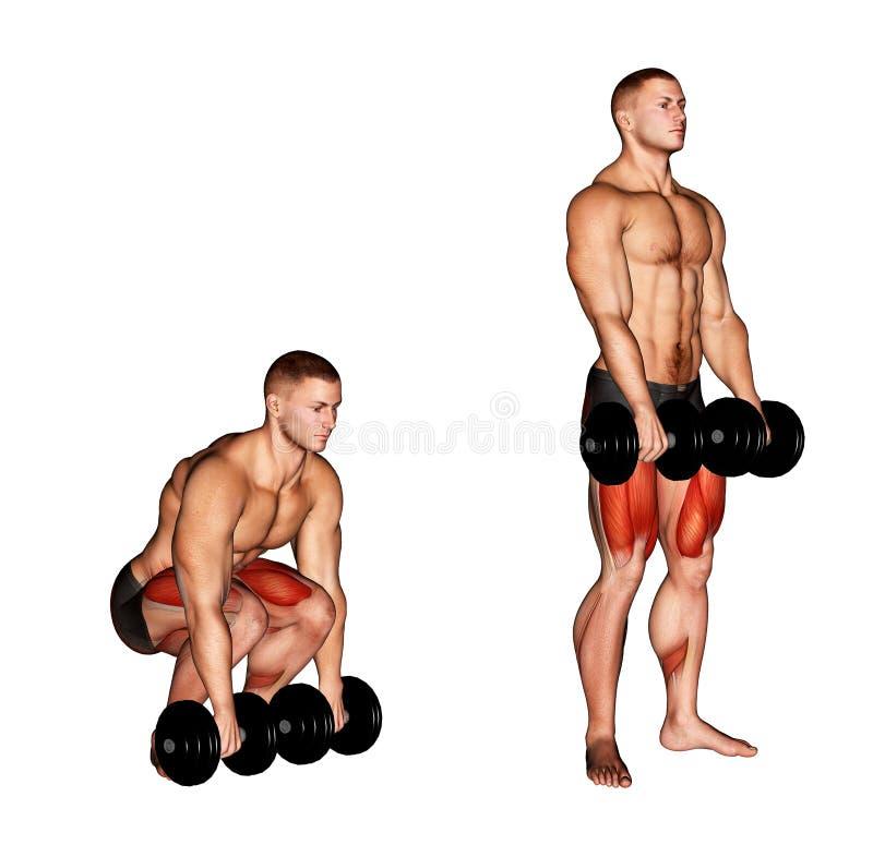 Exercising. Dumbbell Deadlift royalty free stock images