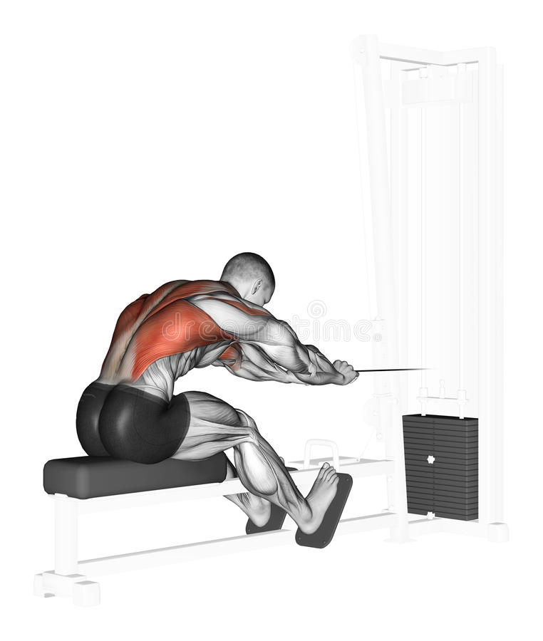 Exercising. End of the lower block Rowing. End of the lower block Rowing. Exercising for bodybuilding Target muscles are marked in red vector illustration