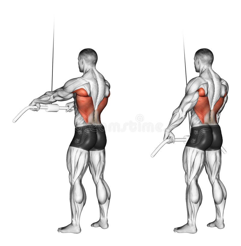 Exercising. End of the upper block straight arms. End of the upper block straight arms. Exercising for bodybuilding Target muscles are marked in red. Initial and royalty free illustration