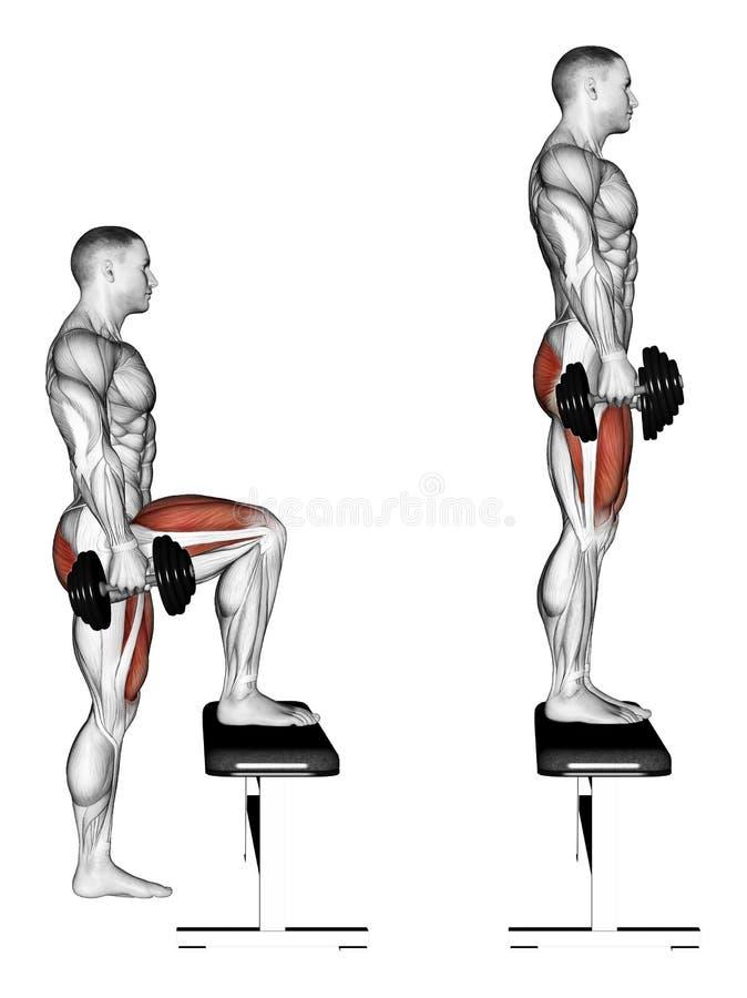 exercising Establecimiento del paso con pesas de gimnasia en banco libre illustration
