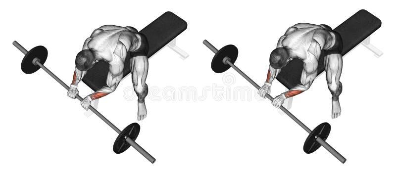 exercising Extensión de la muñeca con un apretón del barbell en el top libre illustration