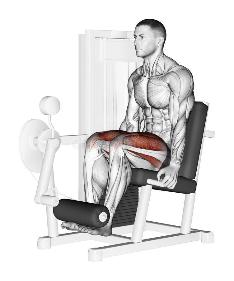 exercising extensión de la pierna ilustración del vector