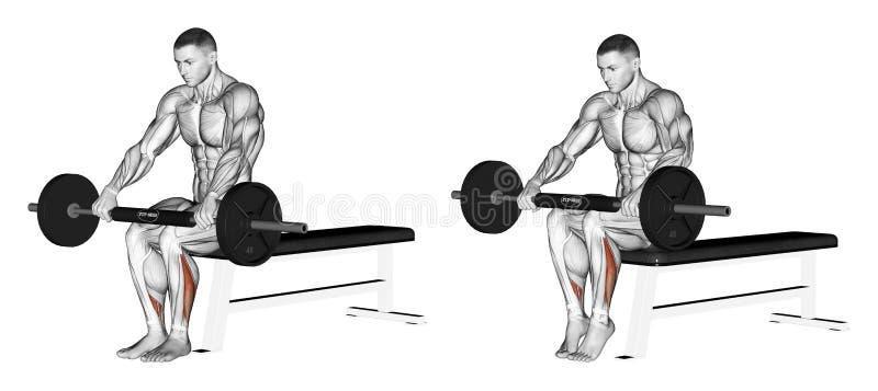 exercising Extensión de la pierna más baja, sentándose en sus rodillas con la barra ilustración del vector