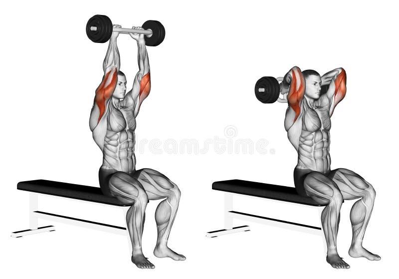 exercising Extensión olímpica de la barra de Tricep ilustración del vector