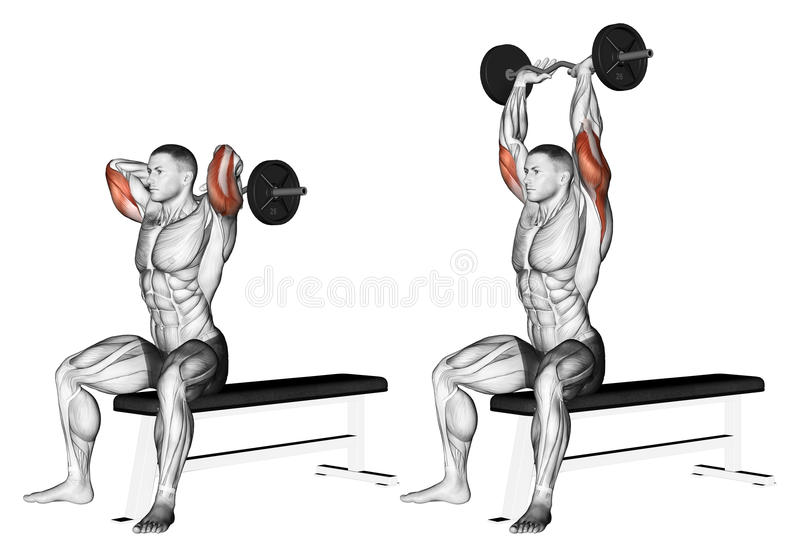 Exercising. Extension arms with curved barbell fro vector illustration