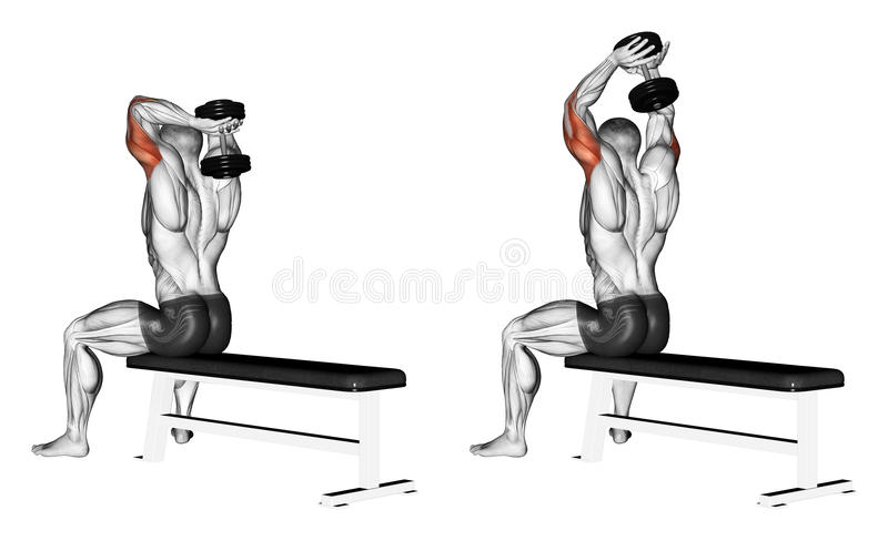 Exercising. Extension arms with a dumbbell from be stock illustration