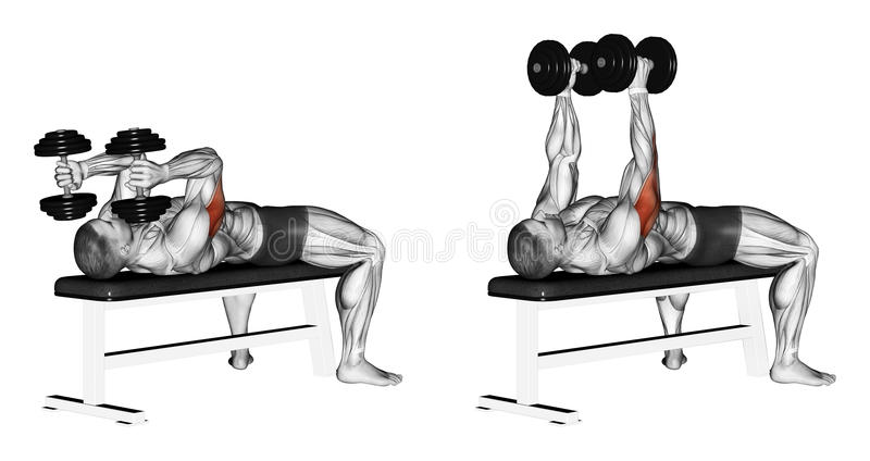 Exercising. Extension arms with dumbbells lying. Extension arms with dumbbells lying. Exercising for bodybuilding Target muscles are marked in red. Initial and vector illustration