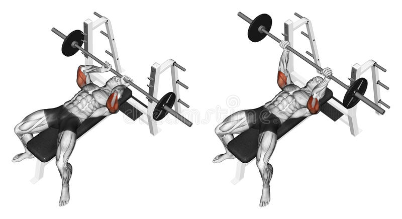 Exercising. Extension barbell lying. Extension barbell lying. Exercising for bodybuilding Target muscles are marked in red. Initial and final steps stock illustration