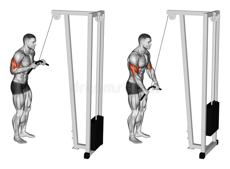 Exercising. Extension of hands in a block simulator muscles biceps and triceps stock illustration