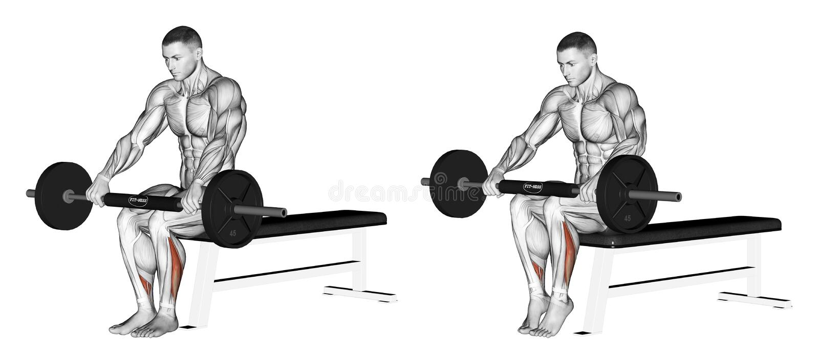 Exercising. Extension of the lower leg, sitting on. Extension of the lower leg, sitting on his knees with the bar. Exercising for bodybuilding Target muscles are vector illustration
