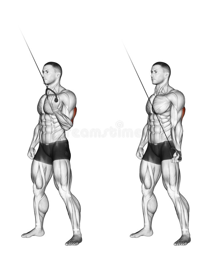 Exercising. Extension of one hand with the upper u royalty free illustration
