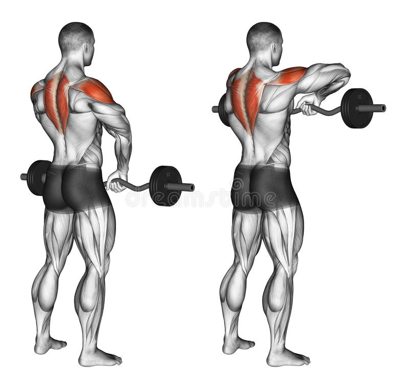 Exercising. EZ Barbell Upright Rows stock images