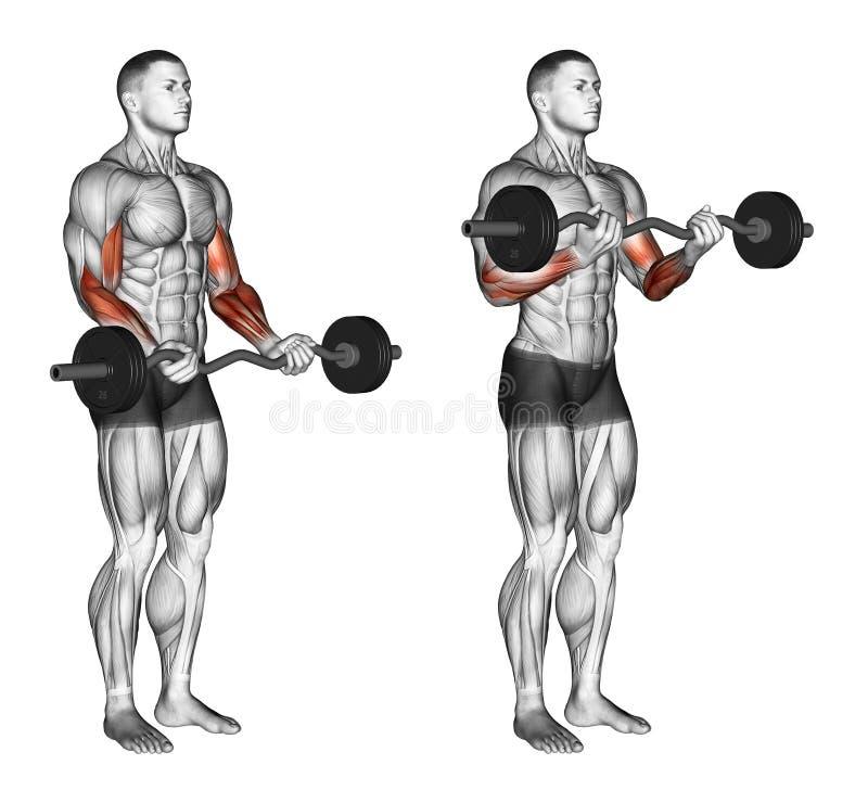 exercising EZ barkrullen vector illustratie