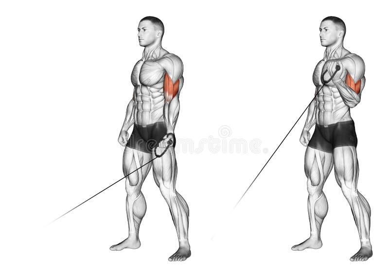 exercising Flexión de una mano con la manija del bloque más bajo stock de ilustración