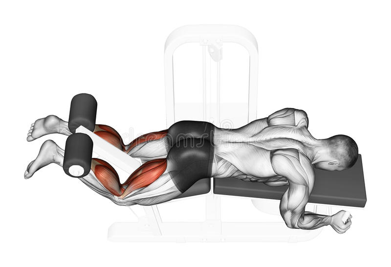 Exercising. flexion simulator lying. Flexion simulator lying. Exercising for bodybuilding Target muscles are marked in red stock illustration
