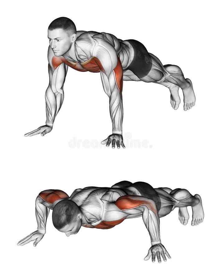 exercising Flexiones de brazos ilustración del vector