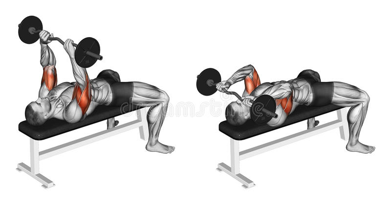 Exercising. French press with a barbell lying. French press with a barbell lying. Exercising for bodybuilding Target muscles are marked in red. Initial and final stock illustration