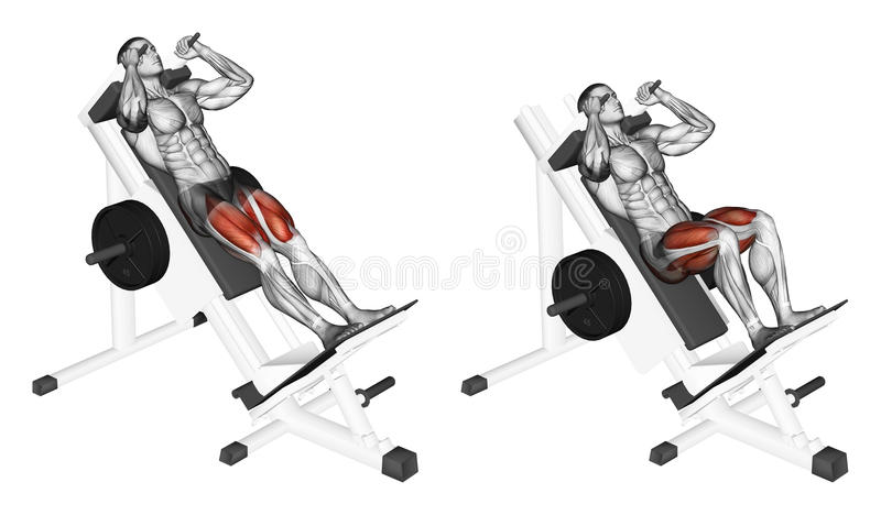 Exercising. Hack squats. Hack squats. Exercising for bodybuilding Target muscles are marked in red stock illustration