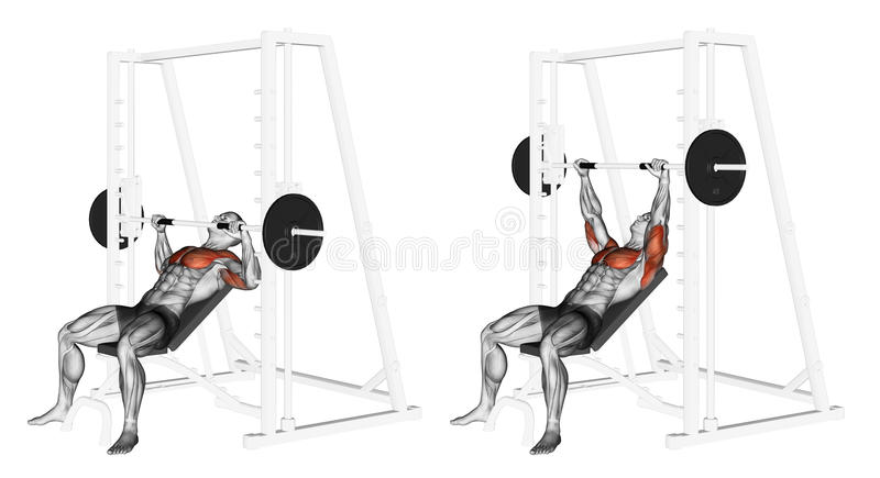 Exercising. Incline Smith Machine Bench Press. Incline Smith Machine Bench Press. Exercising for bodybuilding. Target muscles are marked in red. Initial and stock illustration