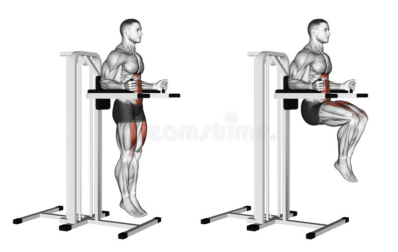 Exercising. Knee Raise on parallel bars. Knee Raise on parallel bars. Exercising for bodybuilding. Target muscles are marked in red. Initial and final steps royalty free illustration