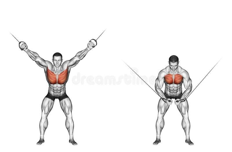 exercising La reducción de la parte superior bloquea la CRUCE ilustración del vector
