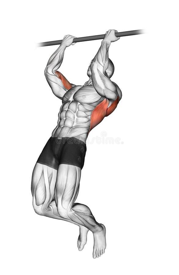 exercising Levantamiento en el undergrip de la barra transversal stock de ilustración
