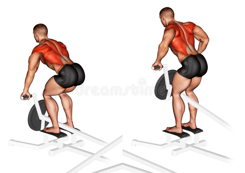 Exercising. Lever T-bar Row plate loaded stock images