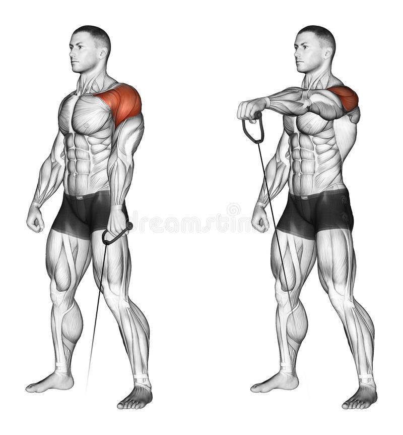 Exercising. Lifting The Arms Forward With The Lowe Stock Illustration