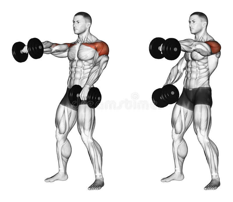 Exercising. Lifting dumbbell forward alternately. Lifting dumbbell forward alternately, lying on the bench. Exercising for bodybuilding. Target muscles are royalty free illustration